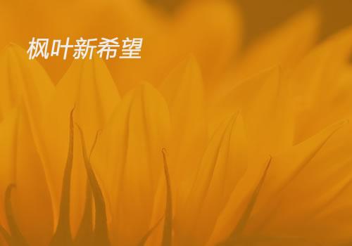 新希望教育-东莞网站设计